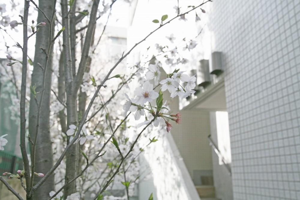 屋外共用スペース・桜の庭園